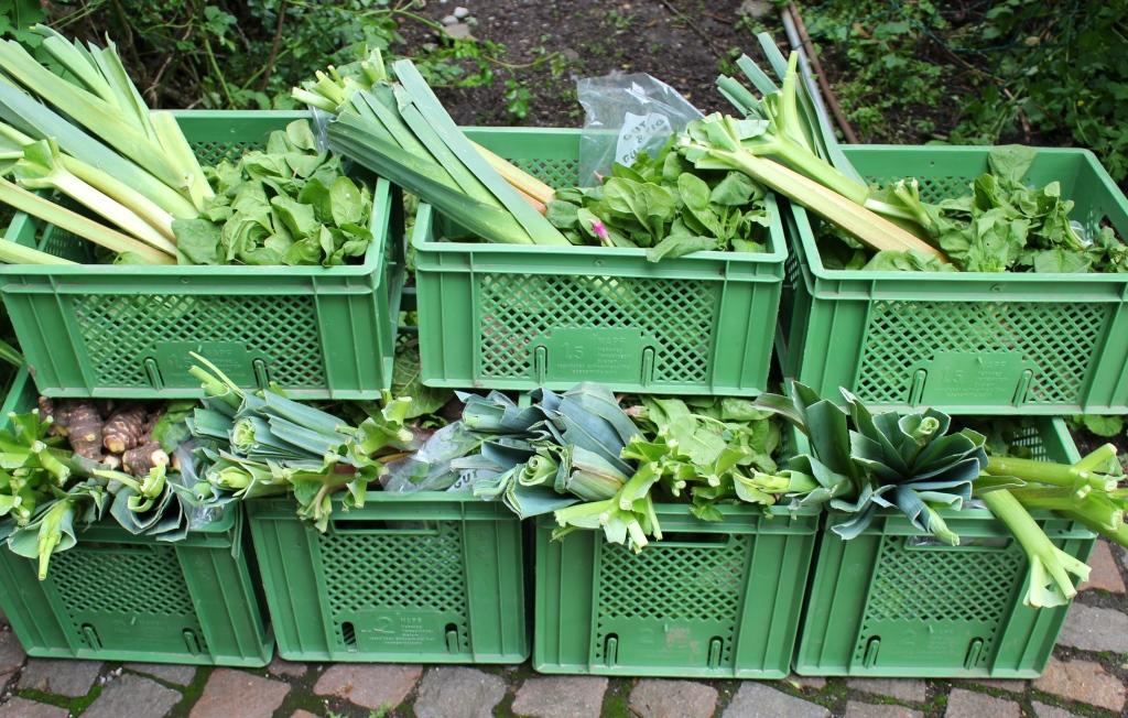 Frisches Bio-Gemüse direkt vom Gärtner – jede Woche, das ganze Jahr